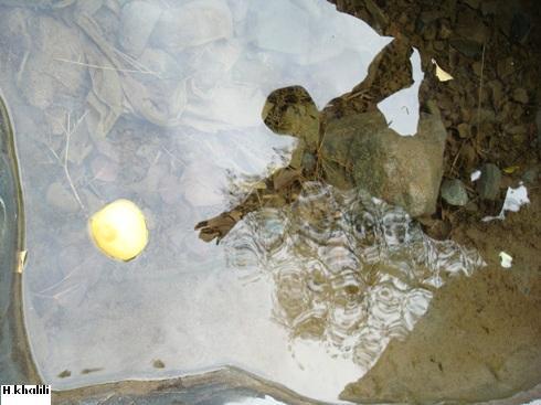 in طبیعت عکاس : Hamed Mirzakhalil عکس اشیاء درآب