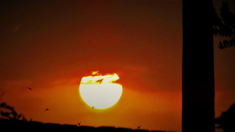 in نجومی (عمق آسمان) عکاس : نایت پرندگان وغروب خورشید