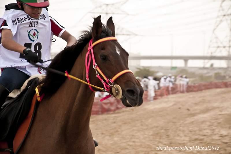in انسان عکاس : shadi.porooshani مسابقات اسب دوانی دوبی ۲۰۱۳