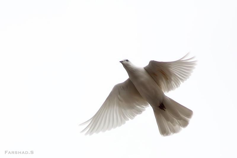 in حیوانات عکاس : farshad پرواز را بخاطر بسپار...