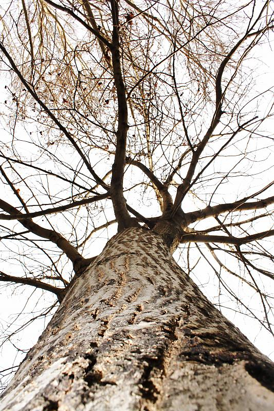 in طبیعت عکاس : gandom عریان ریشه در زمین
