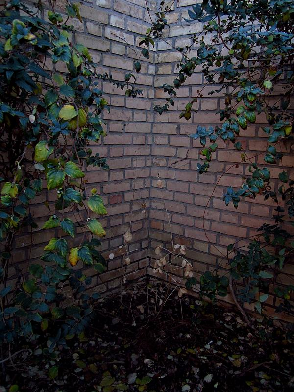 in مفهومی عکاس : شادي شهراييني ریشه در تنهایی