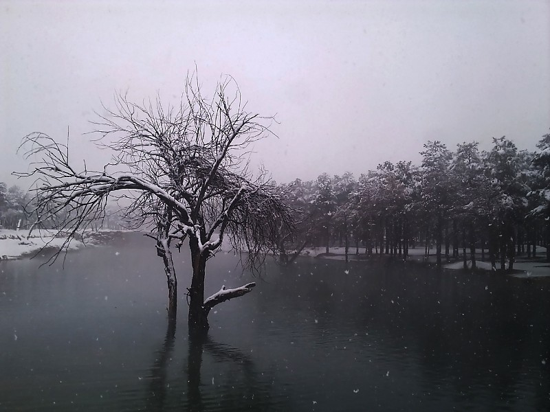 x 6536 :نمایش ها || in طبیعت عکاس : علیرضا محمدی snow