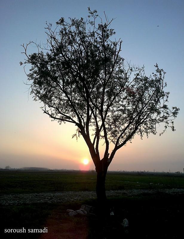 in طبیعت عکاس : Soroush Samadi ریشه در غروب