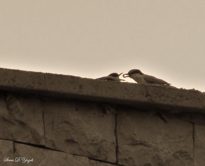 in حیوانات عکاس : stargazer مهر...