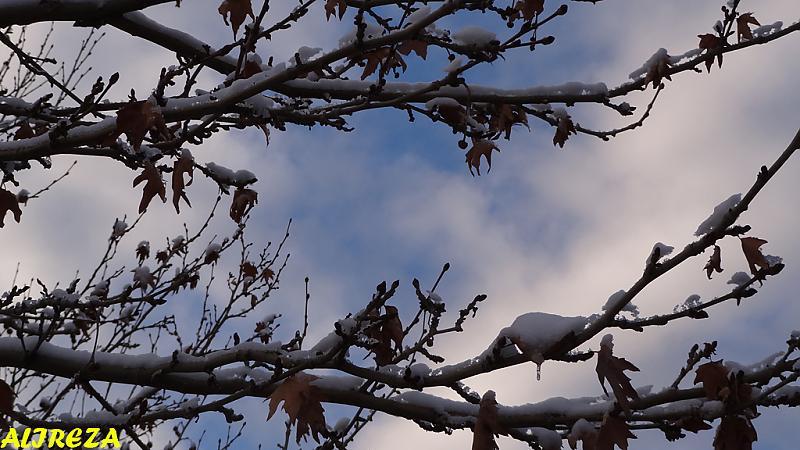 in طبیعت عکاس : |Alireza| آسمان آبی...سلام
