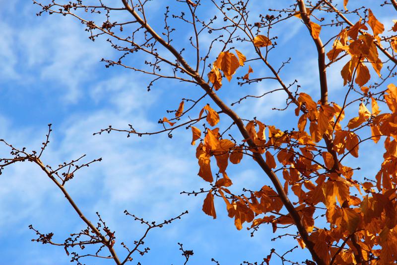 in طبیعت عکاس : *sh نارنجی و آبی