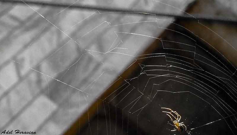 in حیوانات عکاس : kopernik Spider