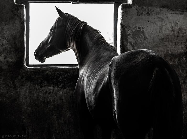 in حیوانات عکاس : nima اسارت